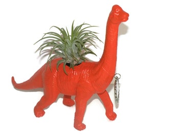 Dinosaur planter with custom message and air plant. Meet Gavin the Brachiosaurus.