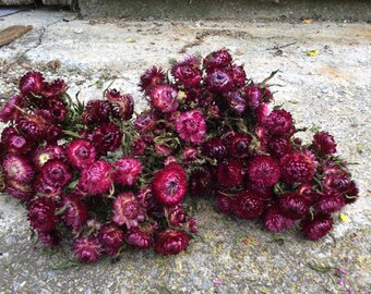 5 bunches deep pink Strawflowers -dried flowers
