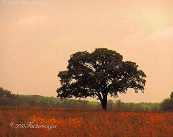 Landscape Lone Tree Fall Colors Painted Effect Wall Art Art Decor Digital Download Fine Art Photography