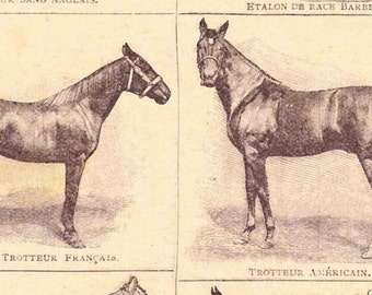 Antique French Print Dictionary Page 1920s Engraved iIlustrations Race Horses paper projects scrapbooking, collage