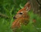 Blank note card, greeting card, photo notecard, photo card, wildlife note card, Deer note card, deer photography, Whitetail deer, deer print