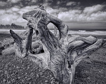 Driftwood on Rialto Beach in Olympic National Park in Washington State No.170 A Black and White Landscape Photograph