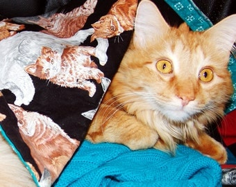 Apelsin the Orange Cat Postcard