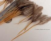 Craft Feathers Golden Badger Blonde Natural Feather Plumes, Feather Craft Supplies, Natural Supplies, Rooster Saddle, Ginger Feathers, 30pcs