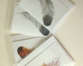 Set of four feather blank greetings cards, notelets reproduced from original paintings