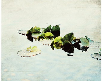 Pond photography, nursery wall decor, lily pads, fine art print