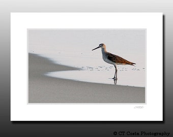 Sandpiper Photography, Shore Bird Signed Small Matted Print,, Brown, OBX NC,  Fits 5x7 inch frame