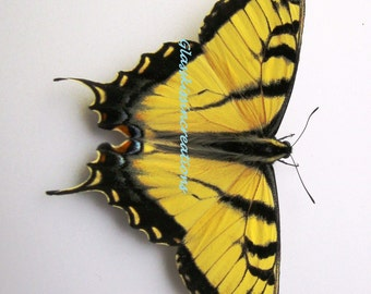 Butteryfly - Fine Art  Photography Print  8 x 10""