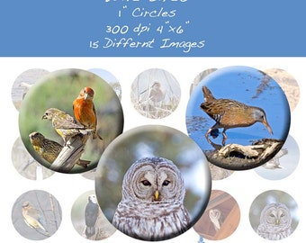 Wild Birds 1 Inch Circle Bottle Images INSTANT DOWNLOAD WB001