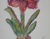 Amaryllis, original watercolor and ink blank note card