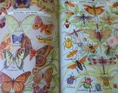 Vintage book Webster's Encyclopedia Dictionary Color iIlustrations 1940-41 Butterflies Game birds fish