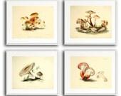 Set of 4 Art Prints - Mushrooms - For Babies/Kids/Nursery/Kitchen/Home