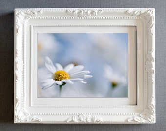 flower photograph daisy photo fine art photo white blue pastel wall art decor spring garden summer
