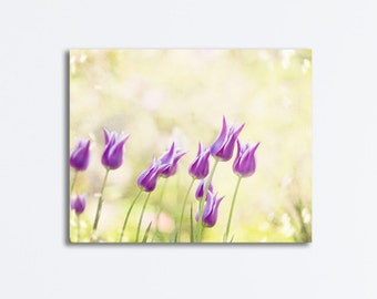 """Yellow Purple Flower Canvas, tulips violet floral gallery wrap nature photography nursery wall print botanical photo, """"Dancing in the Sun"""""""