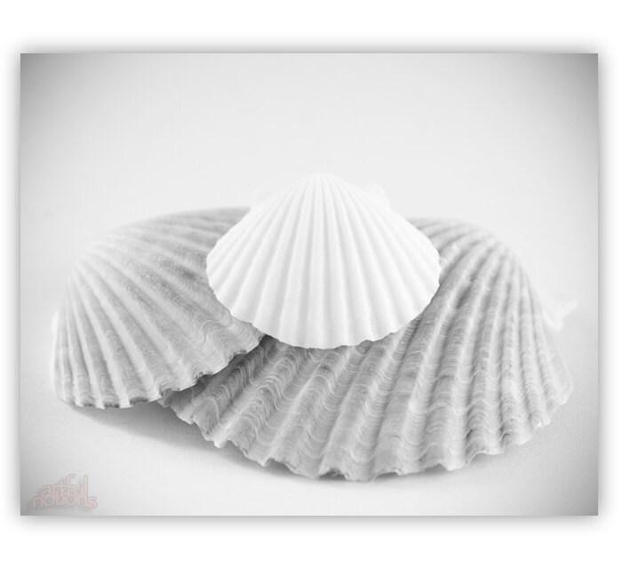 sea shell decor black and white bathroom art seashell art