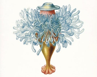 Coastal Decor Art - Hydra Natural History Giclee Art Print No. 1 8x10