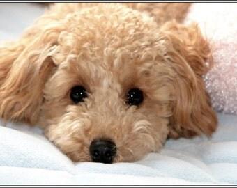 Set of 4 Dog Puppy Poodle Stationery Greeting Notecards / Envelopes