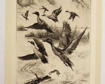 Vintage 1940's R.H. Palenske Getting Away Ducks Wildfowl Print