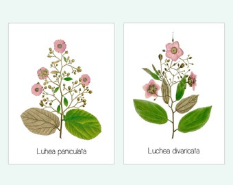 Pink floral art set, Pink Flower Print, Bridesmaid gift, Cottage Art, Botanical Illustration, 8x10 Matted Prints, Clean modern botanical art