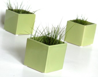 THREE Little Modern Glossy Light Green Ceramic Cube Planters, Light Green Vases, Green Pottery Vases, Green Air Plant Pods (Without Plants)