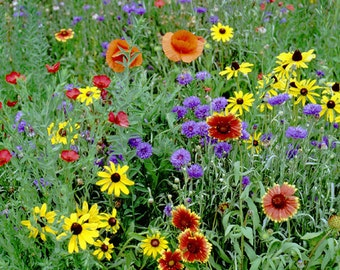 Save The Bees Seed Mix, Polinator Mix, Bulk for seed packets