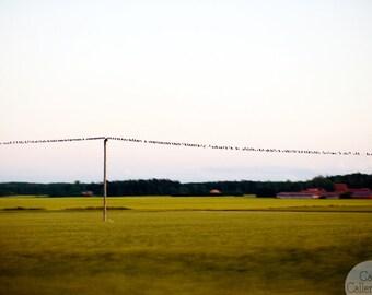 Digital download - photography art wall decor landscape field summer birds wire mustard print sky Sweden