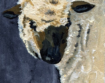 Black faced Ewe from one Kay's acrylic paintings