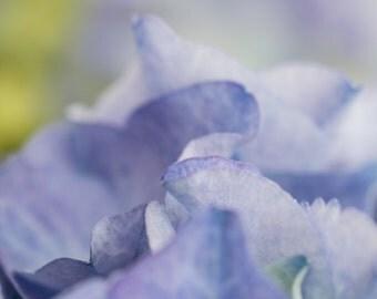 Soft Blue Flower Art Print - Hydrangea Flowers - Summer  - Floral Photograph - Home Decor - Fine Art Photograph - Flower Wall Art