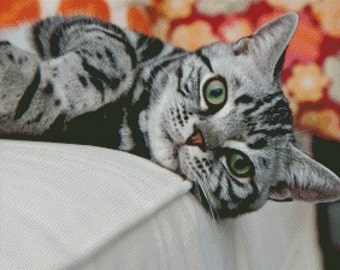American Shorthair Cat Cross Stitch Pattern 002