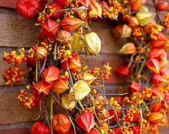 Heirloom 100 Seeds Physalis Chinese Lanterns Winter cherry Husk tomato Orange Gooseberries Ground cherries Flower S098