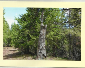 PILCHER CREEK - Original Outdoor Scenery / Local Artist Digital Photo - Blank Photo Card Twin Fold Design - In Stock