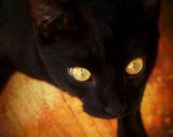 Velvet Cat, Photograpy