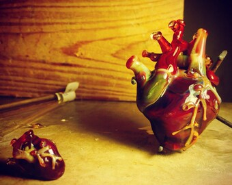 Large anatomical heart