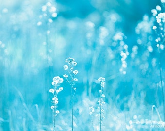 Pretty Weeds - Soft & Dreamy- Cyan Blue White - Nature Abstract Bokeh - Home Decor Fine Art Print - Wall Art Photography