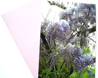 """Glycine """"postcard and its matching envelope, based on one of my photos."""""""
