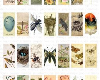 Botanical Domino sized Clip Art Sheet