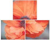 Set of 3 Poppy Flower Photographs, Flower Print Set, Your Choice of Size, Fine Art Photography, Orange, Gray, Nature, Photo Collection