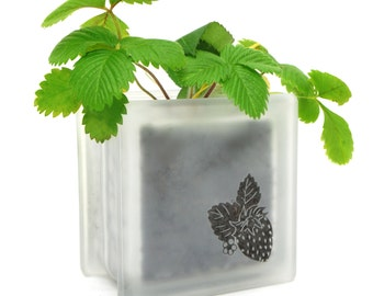 Sweet strawberry pot made from glass block and hand etched