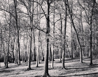 Fine Art Photography- Shelby Park- Nashville-Forest-20x20-wall art-home decor-black and white-nature--trees-art print