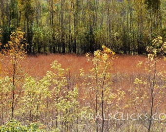 Fall Autumn Photograph River Bottom Serenity Yellow Orange Gold Brown Green Decorating Home Office Wall Decor Nature Autumn Photography