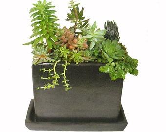 """Succulent Mix Block-shaped Black Rectagular Ceramic Planter Centerpiece Vase Dish Garden Gift Modern Minimalist Planter 8"""" Wide"""