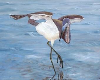 The Dance, Mini Giclee Print, Tricolored Heron, Wading Bird