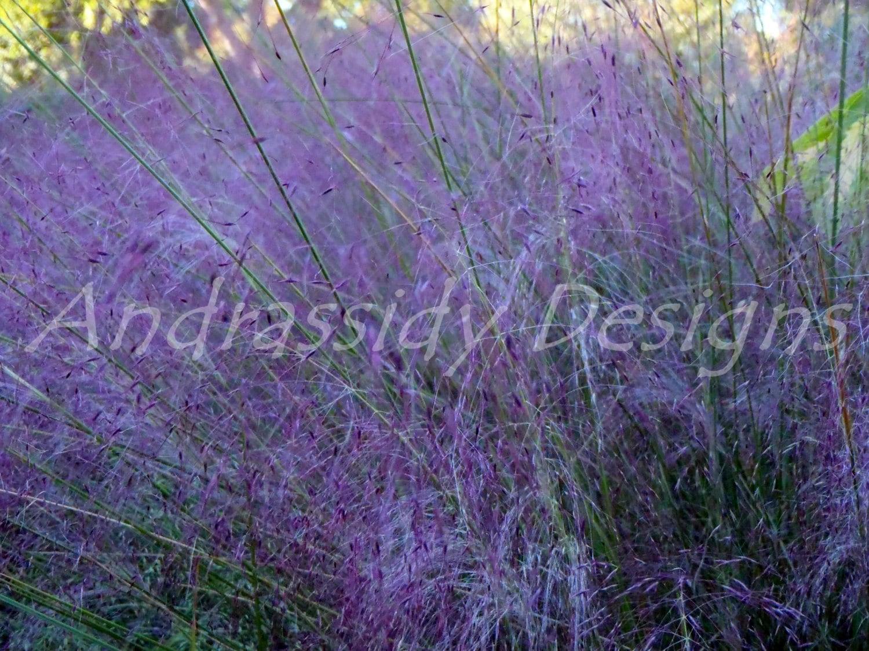 Purple grass original photograph for Purple grass