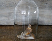 Large Glass Dome 10 Inches Tall Glass Cloche for Collectible Display Showcase Glass Cover
