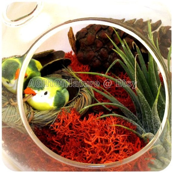 Air Plant Terrarium Christmas Ornament A Gift Of Nature