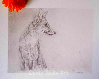 Limited edition print 'Summer Fox' (19.5x15) Limited to 20 only. Unmounted