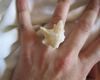 Seashell ring from the Mediterranen sea