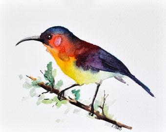 ORIGINAL Watercolor bird painting, Rainbow Colored Bird, 6x8 inch Bird Illustration