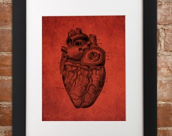 Anatomical Heart Vintage Art Print | Poster Wall Art Cardiac Nurse Cardiology Anatomy Nursing Red Science Scientific Valentines Love
