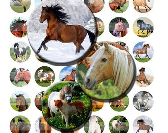 Horse Pony Colt Farm Animals Digital Images Collage Sheet 1 inch Circles INSTANT Download BC77